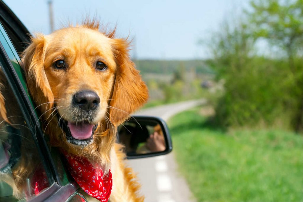 driving with pet safe